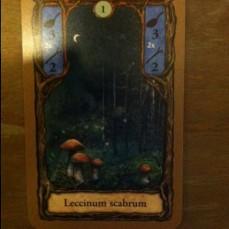setas-noche-fungi