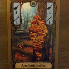 setas-fungi-juegodemesa